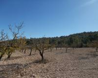 Resale - Country Property - Yecla