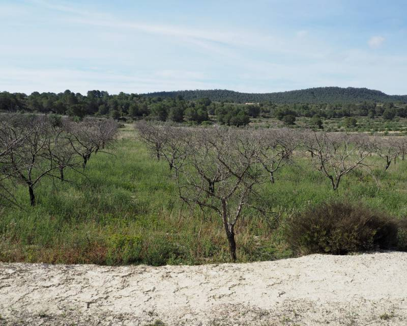 Plot of Land - Resale - San Miguel de Salinas - Torremendo